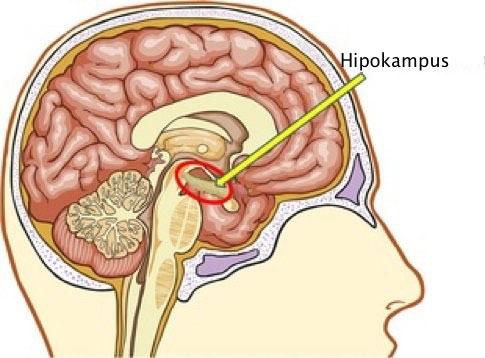 Nöropsikolojik Değerlendirme ve İlişkili Alanlar - I
