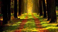 Olumsuz duygularla mücadelede yeşil alanların önemi.
