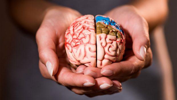 Irkçı Beynin Analizi