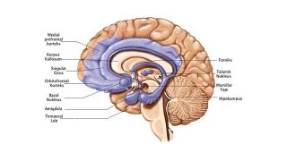 Majör Depresif Bozuklukta Biyobelirteçler 2