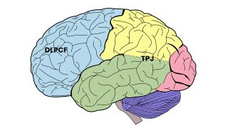 Haksızlığı Cezalandırma Davranışında Beynin Farklı Bölgeleri Arasındaki Bağlantının Etkisi